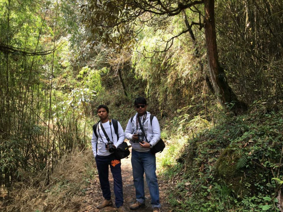 Trekking Through Barsey Rhododendron Sanctuary