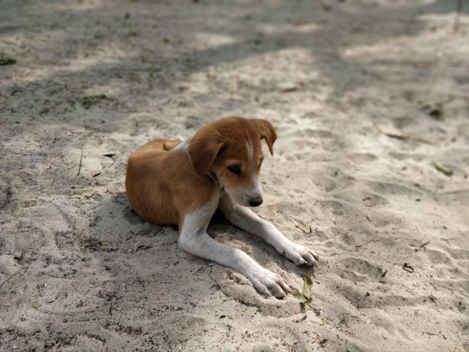 Puppy at Mousuni Island